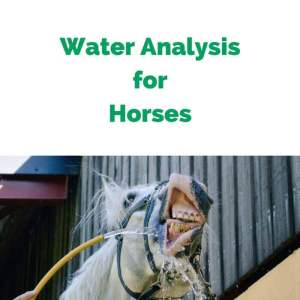 Water-Analysis-for-Horses.jpg