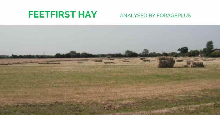 Feetfirst Horse Hay analysed by Forageplus