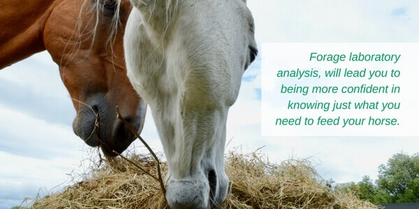 Use forage analysis to confidently feed your horse