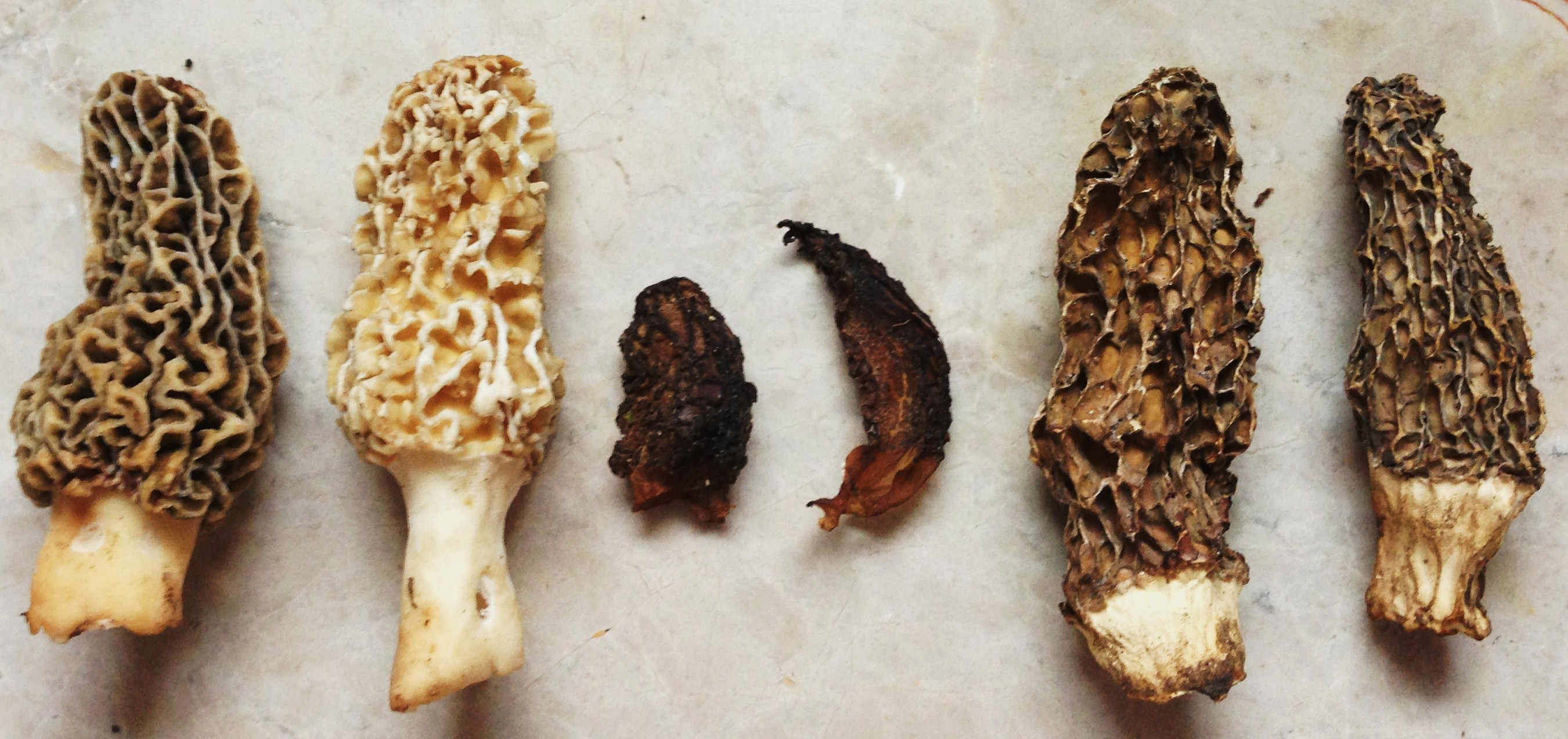 How to Dry or Dehydrate Wild Mushrooms
