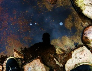 mushroom hunting in the boundary waters