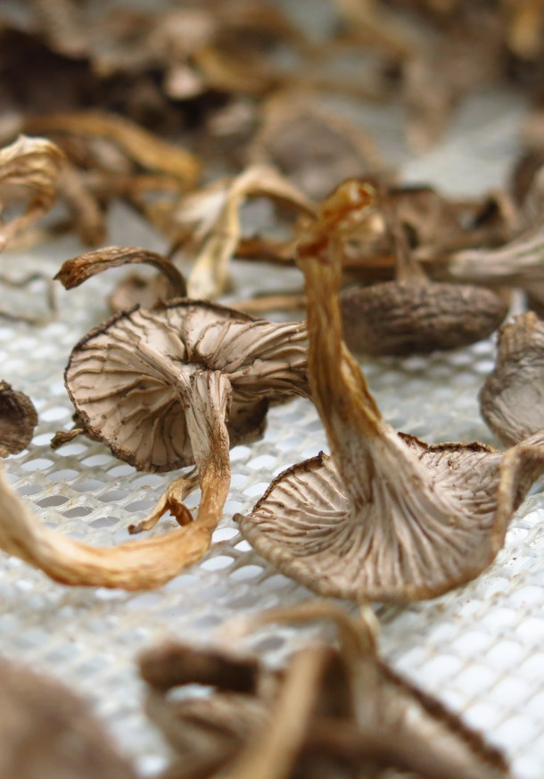 dried yellowfoot chanterelles