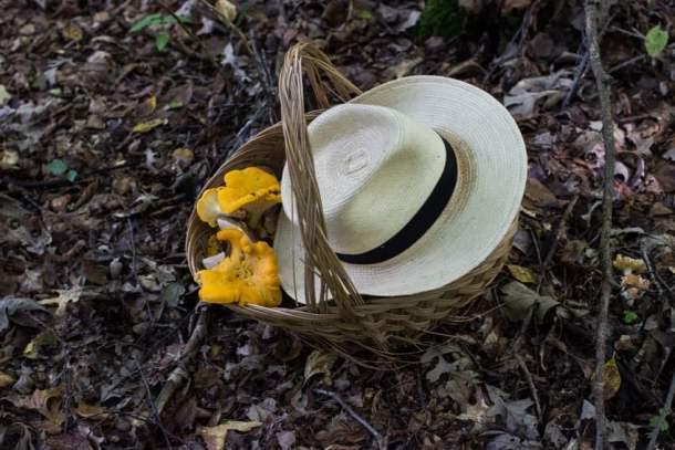 mushroom hunting in minnesota