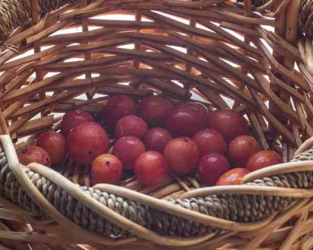 wild plum recipe