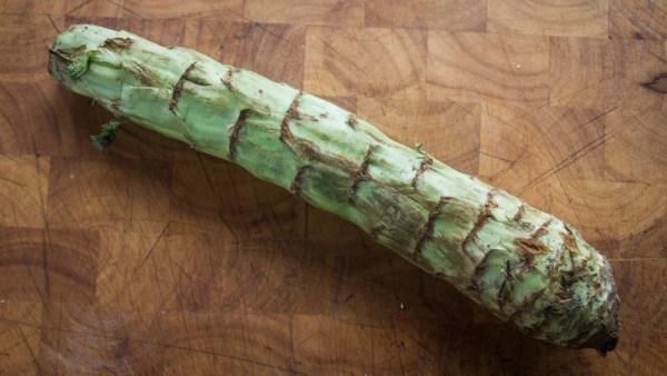 Celtuce or Chinese stem lettuce
