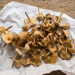 fairy ring mushrooms, marasmius oreades