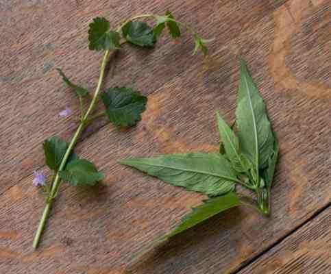 Foraged Herbs