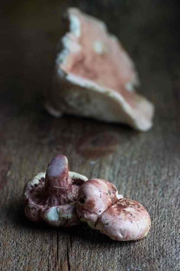 Hygrophorus Russula
