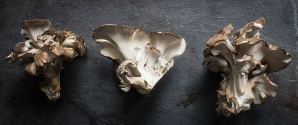 Baby Hen of the Woods Mushroom