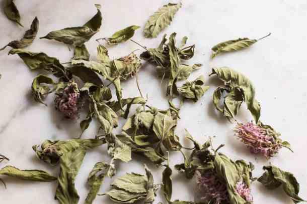 dried wild bergamot
