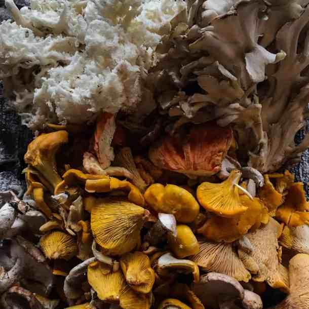 Chanterelle, hericium, maitake, chicken of the woods mushrooms
