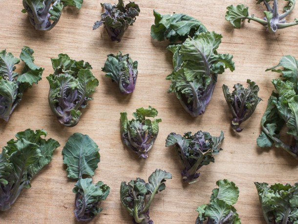 Kale Sprouts or Kalettes