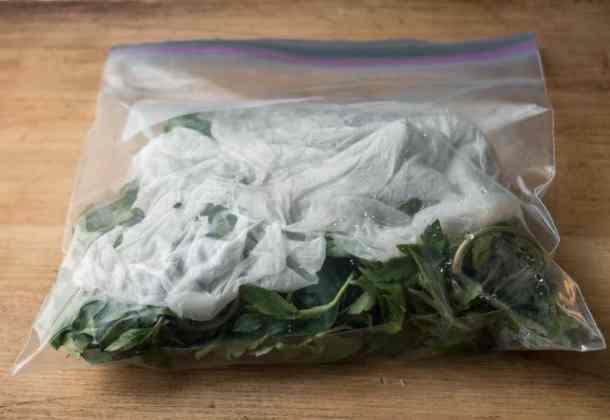 Edible sochan leaves or Rudbeckia laciniata i