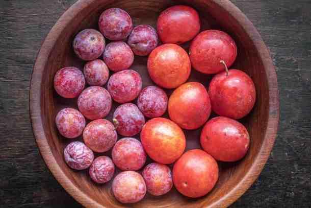 Wild plums from Minnesota