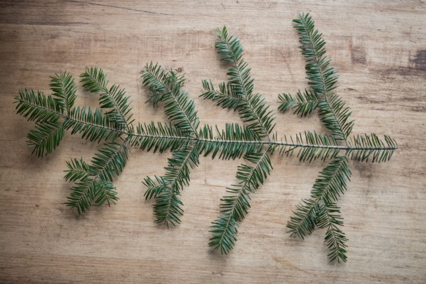 norway spruce branch mn