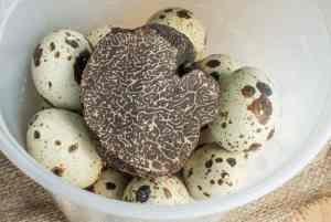 Quail eggs stored with black truffles