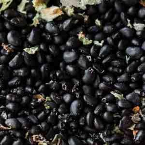 Edible barrel cactus seeds