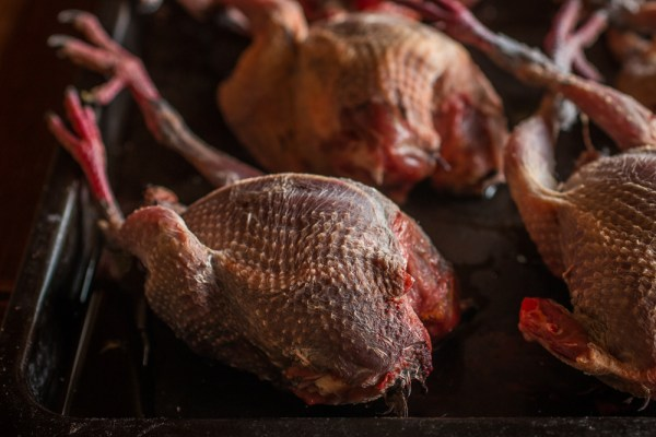 Plucked pigeon or squab