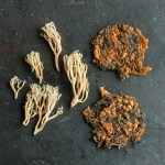 Crown tipped coral mushroom croutons or cheese crackers