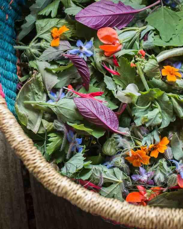 foraged salad greens