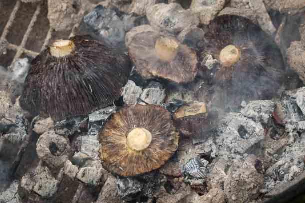 Cooking wild mushrooms in wood embers