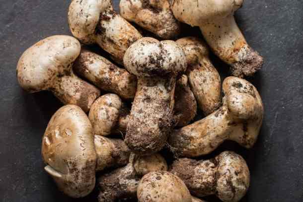 Matsutake mushrooms from Minnesota (6)