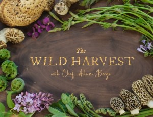 Episode 2 of The Wild Harvest with Chef Alan Bergo