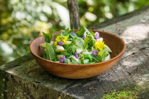 Cattail and milkweed shoot salad recipe