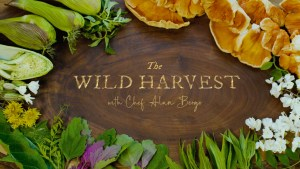 The wild harvest foraging show episode 3 early summer