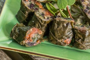 Foraged grape leaves stuffed with wild blueberries pine nuts and wild rice flour