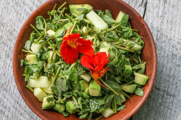 Purslane, avocado, and cucumber salad with cilantro recipe