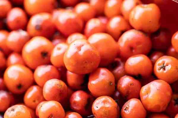 Edible rowanberries or mountain ash berries