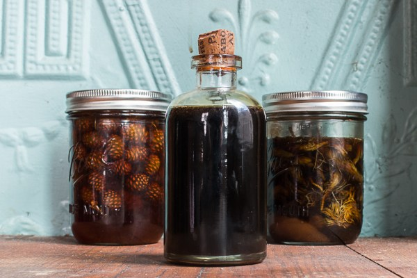 Mugolio syrup made from pine cones and spruce tips recipe