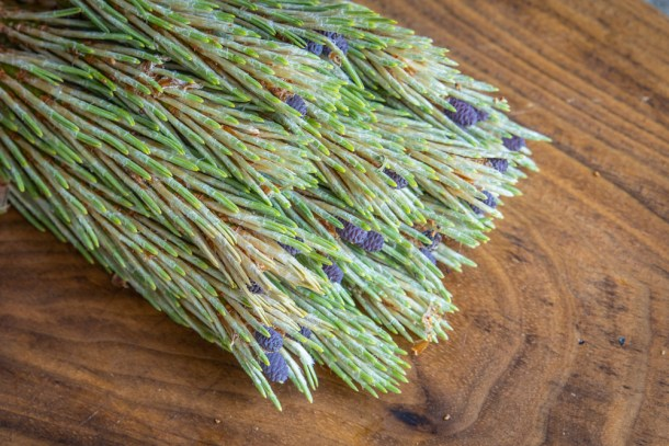 Red pine tips for making syrup