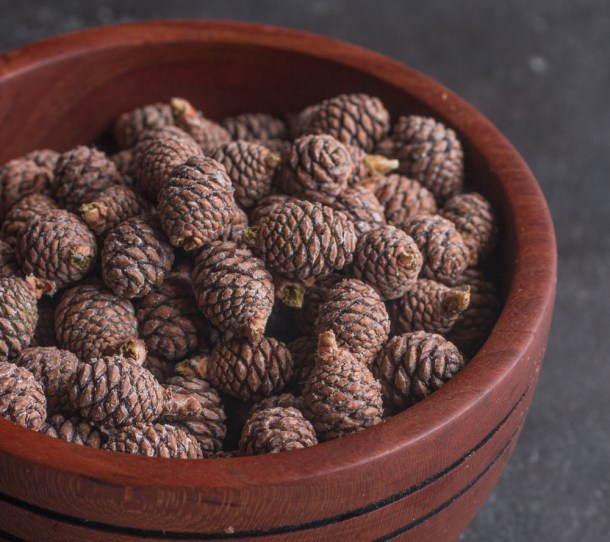Young edible red pine cones for pine cone syrup or mugolio
