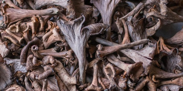 Black trumpet mushrooms from Minnesota, Craterellus fallax