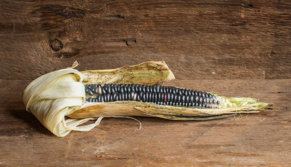 Purple hopi corn