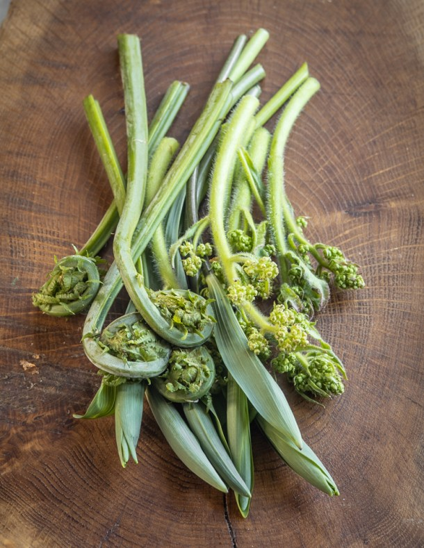 Solomon seal, fiddlehead, and swamp saxifrage shoots