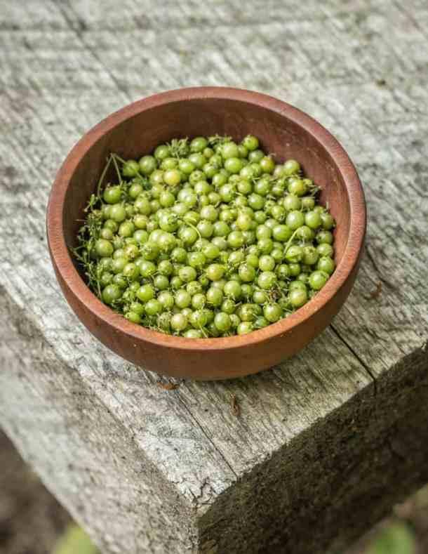 Green coriander, unripe coriander or cilantro seed