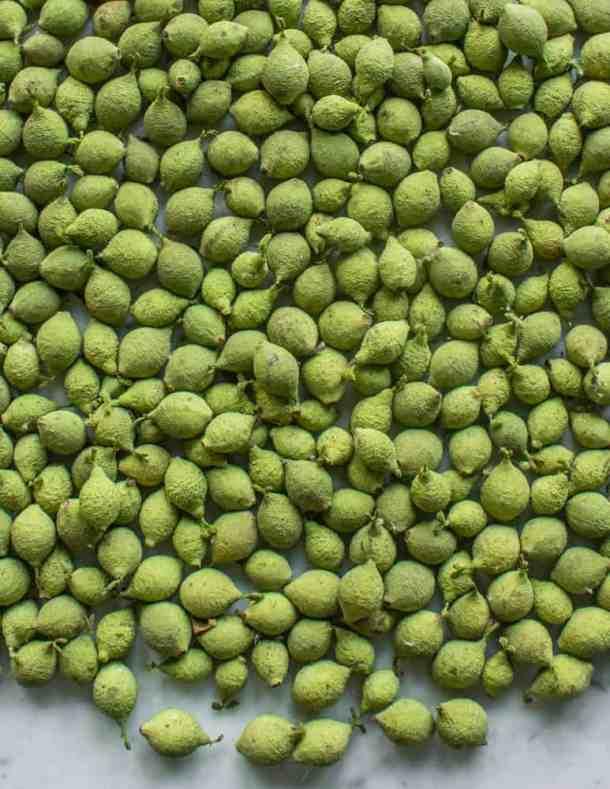 Unripe green black walnuts