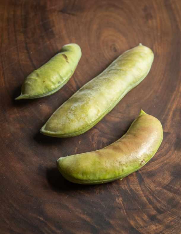 Unripe Kentucky coffee bean pods