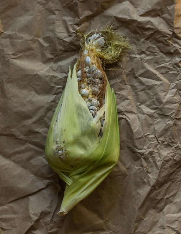 Cultivated huitlacoche, corn smut, or corn mushrooms