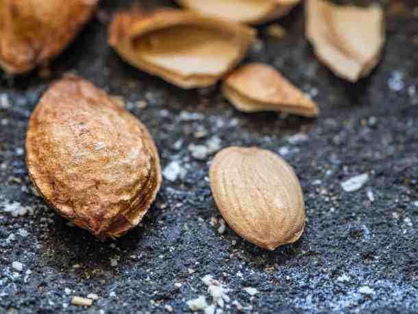 Wild plum kernels