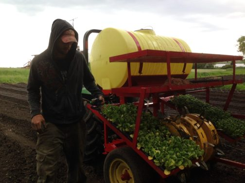 Jonathon & our water wheel transplanter with tatsoi and pak choi