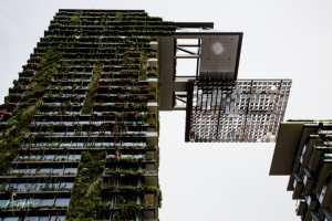 Central Park, Sydney | Foraggio Photographic