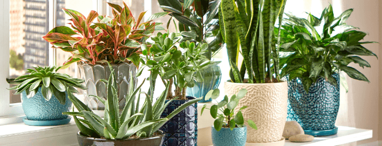 Photo of Establish a strong bond with your friend by gifting her trendy Plants
