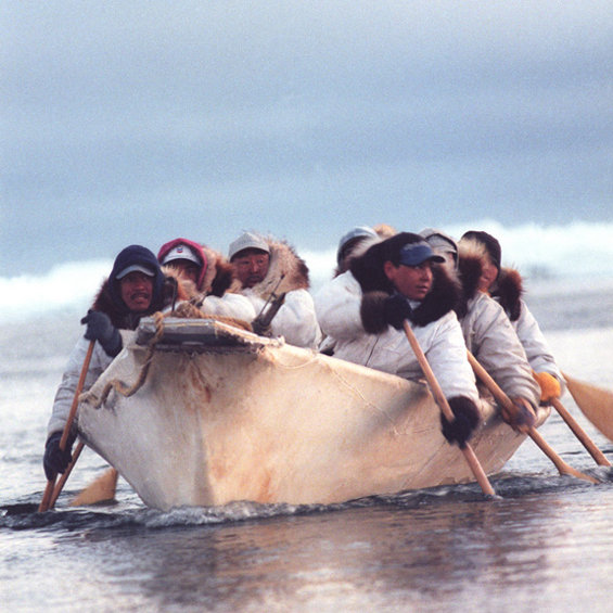 Inuit whale hunters paddle an umiak made from wood and seal skins.