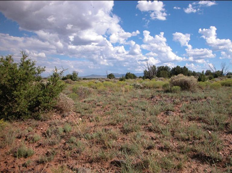 vacant land for sale by owner $2,500 in Williams Arizona 1