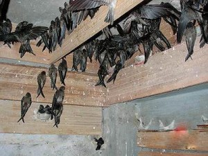 pajak-burung-walet