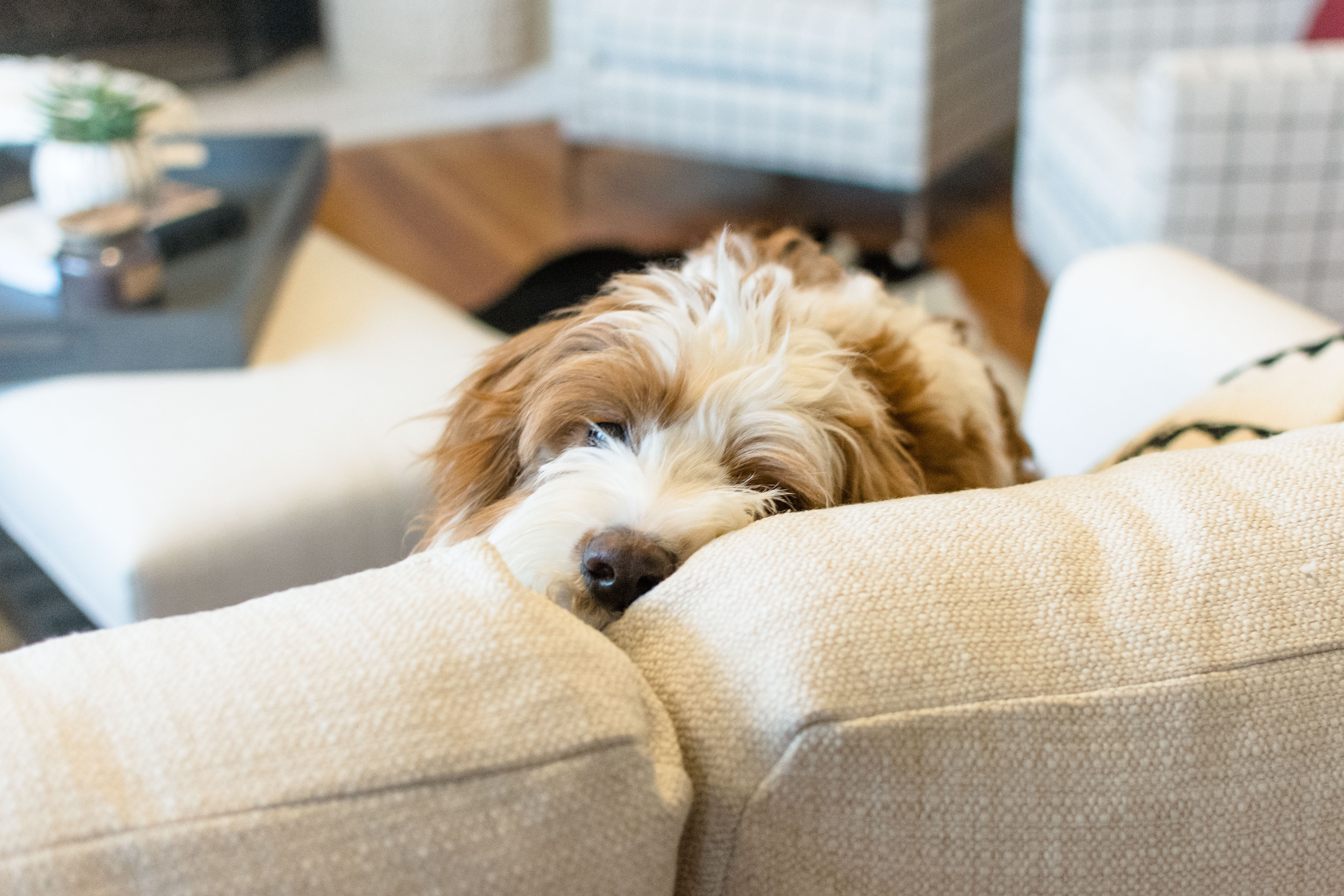 It's pretty obvious Hazel is a fan of our new Decklyn sectional! But, before we jump into today's post, I want to share all the links to the living room ...